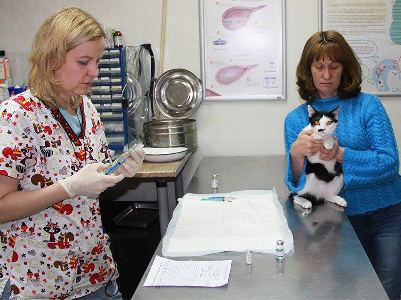 Лечение почек кошек