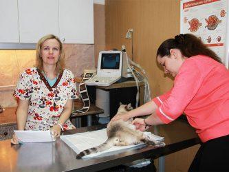 УЗИ диагностика кошек и собак